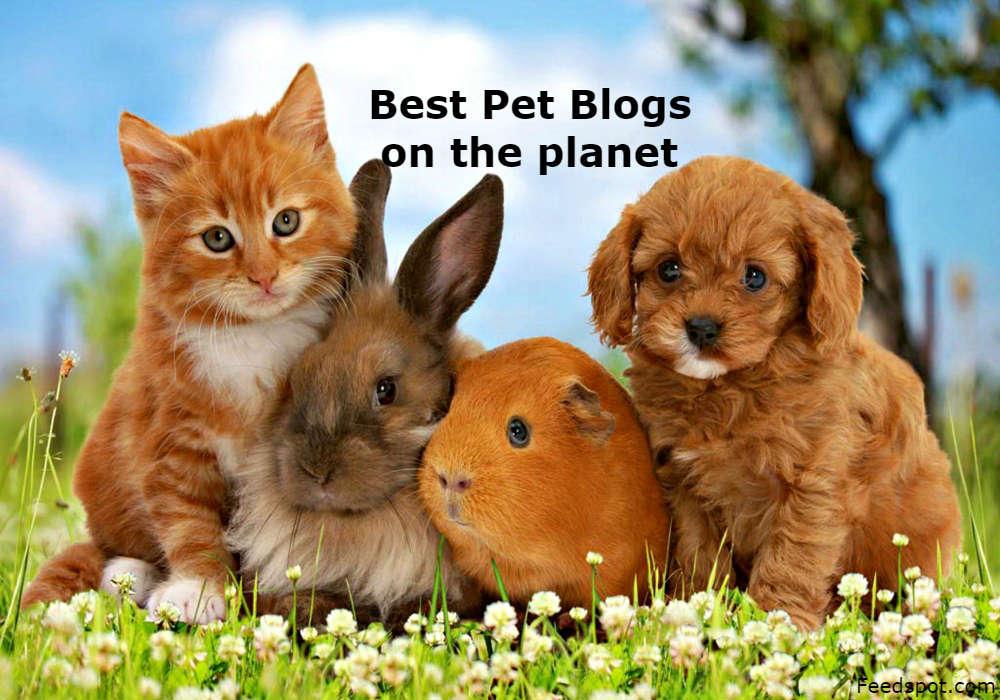 Pet Blogs