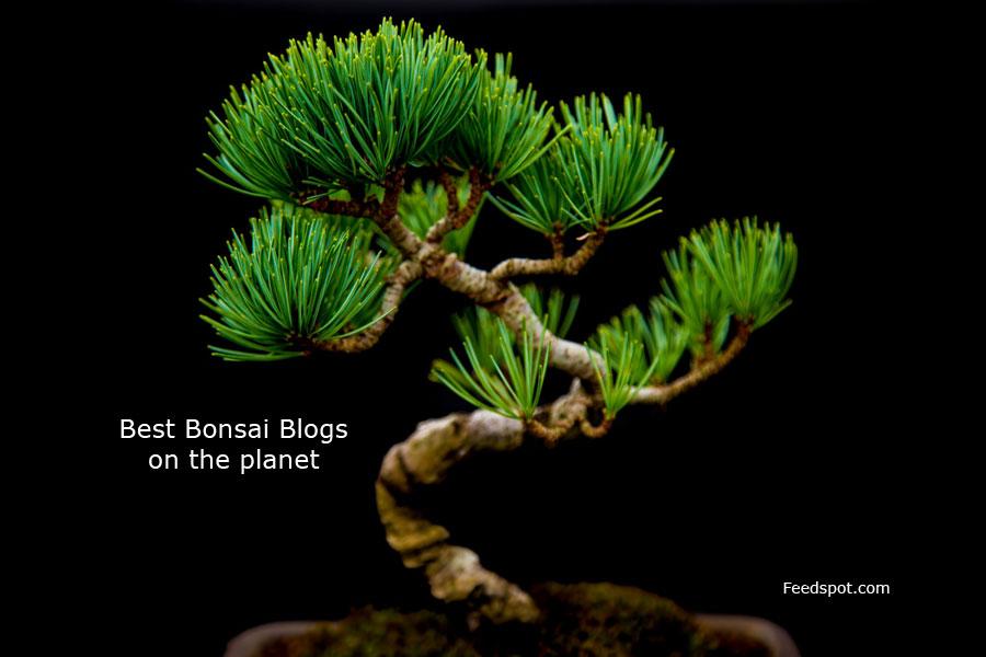 Bonsai Blogs