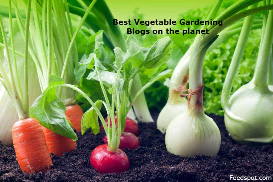 Vegetable Gardening Blogs