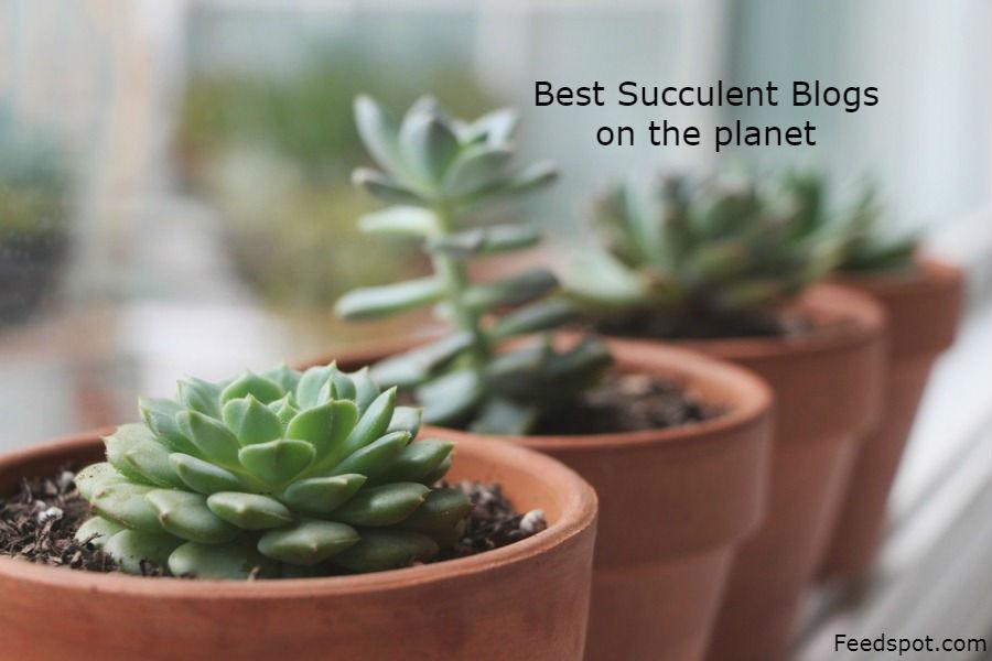 Succulent Blogs