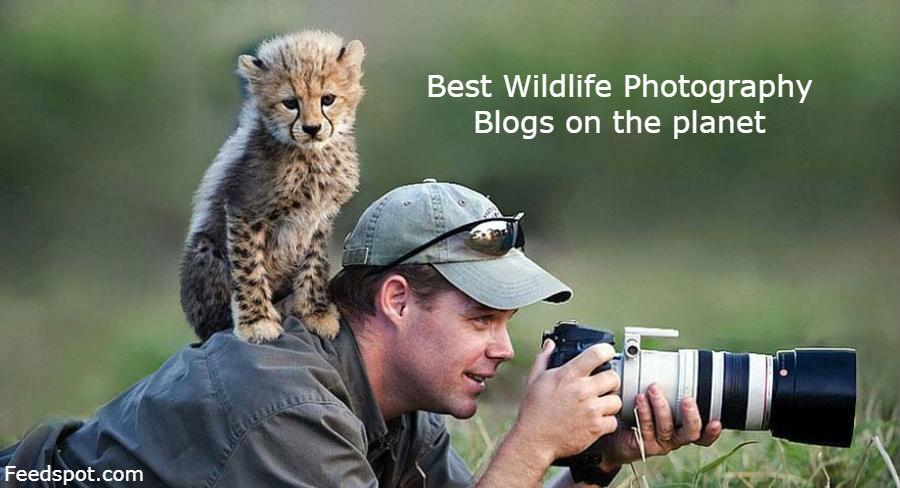 Wildlife Photography Blogs