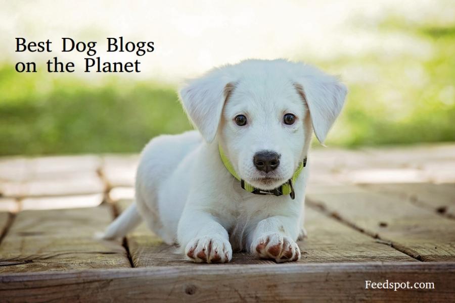 Bark Dog Adoption