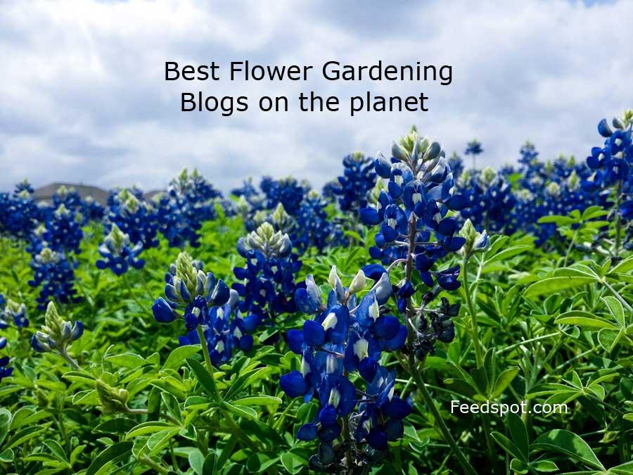 Flower Gardening Blogs