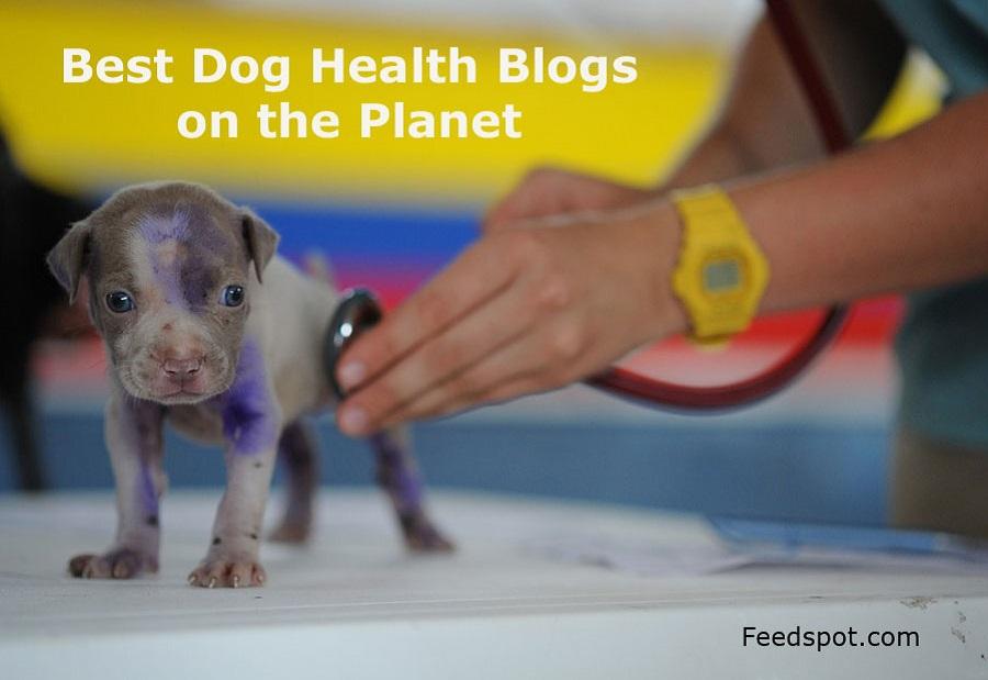 Dog Health Blogs