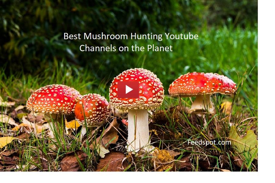 Mushroom Hunting Youtube Channels